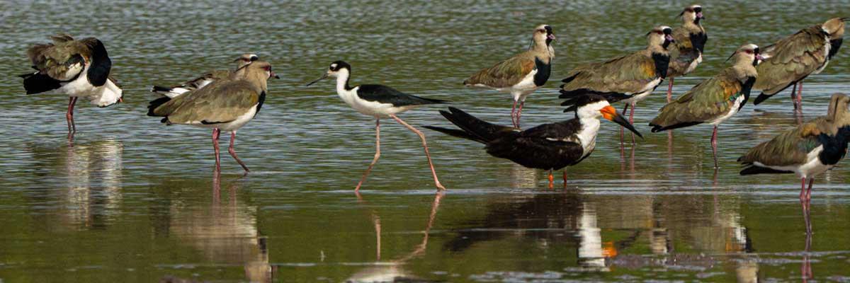 Aves del Casanare