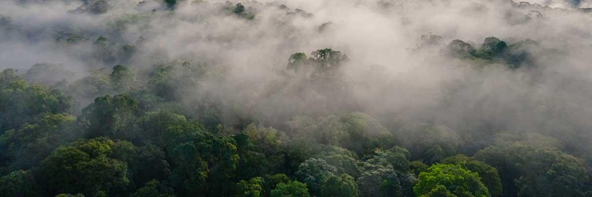 Selva del Putumayo